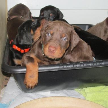 #11 Puppies