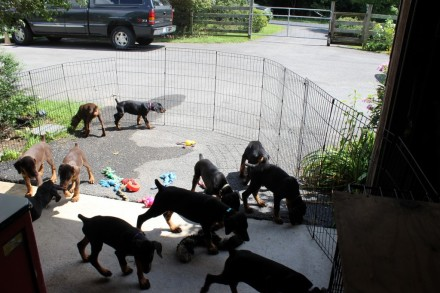 #13 Puppies