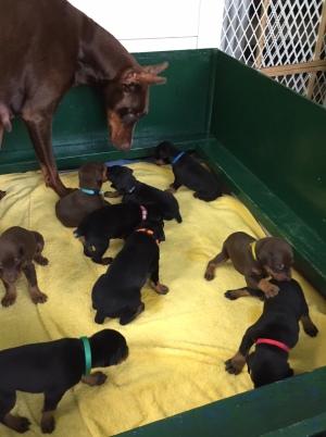 #2 Puppies