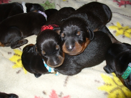 #4 Puppies