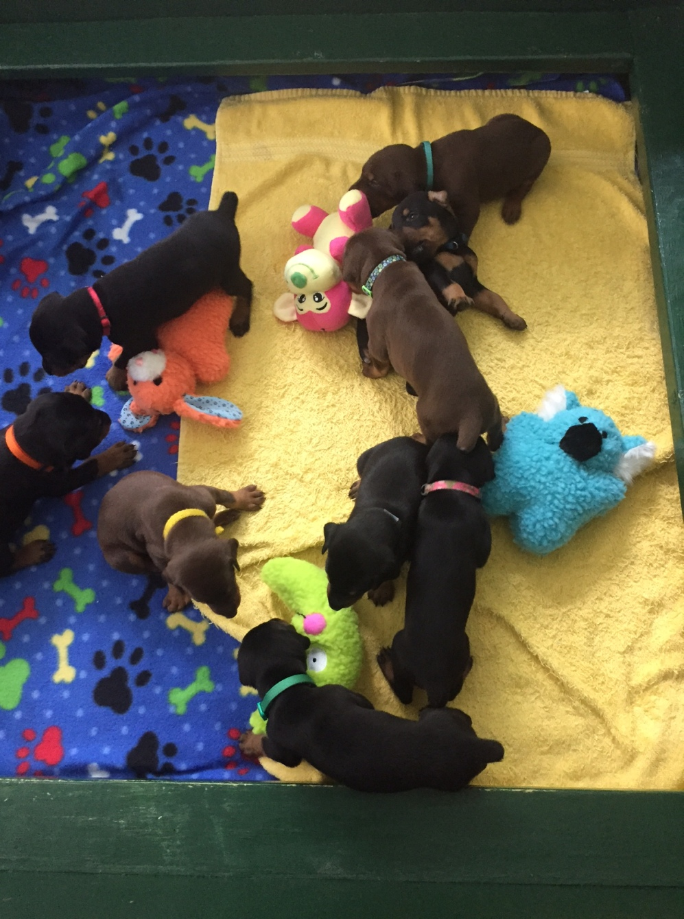 #5 Puppies