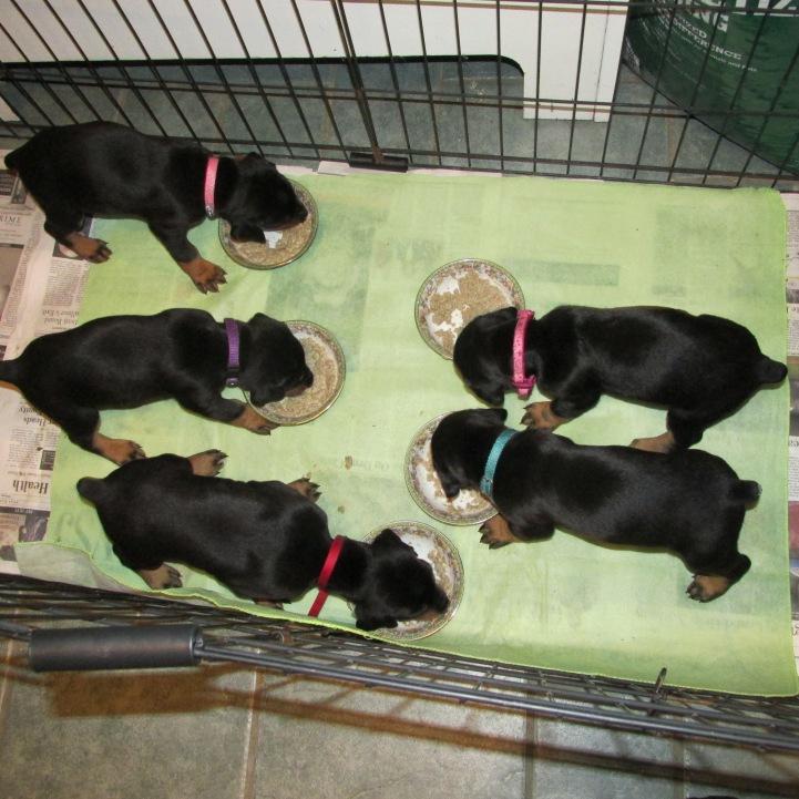 #6 Puppies