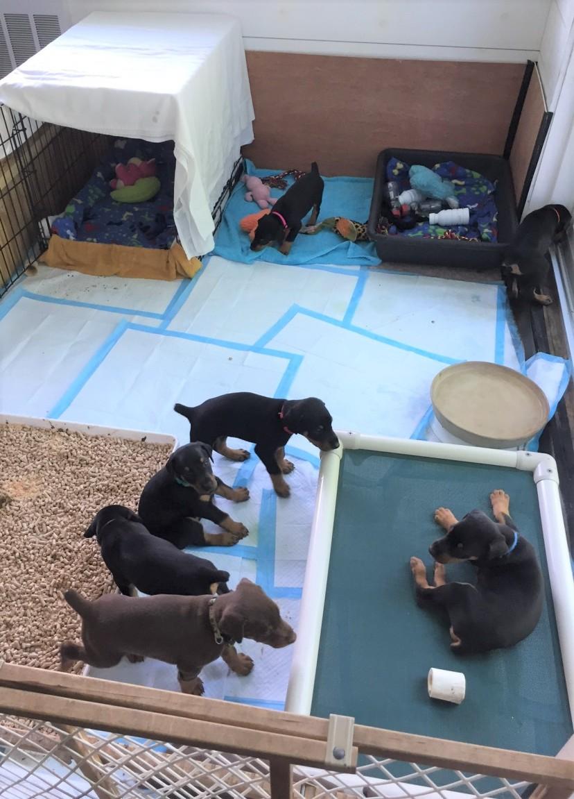#7 Puppies