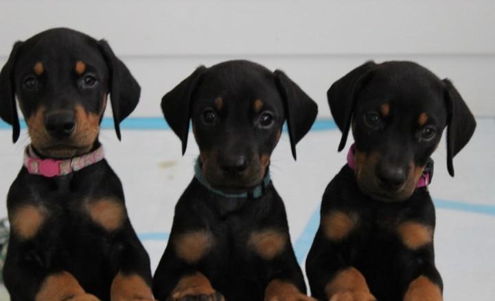 #8 Puppies