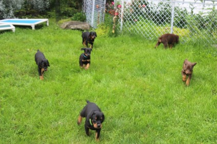 #9 Puppies