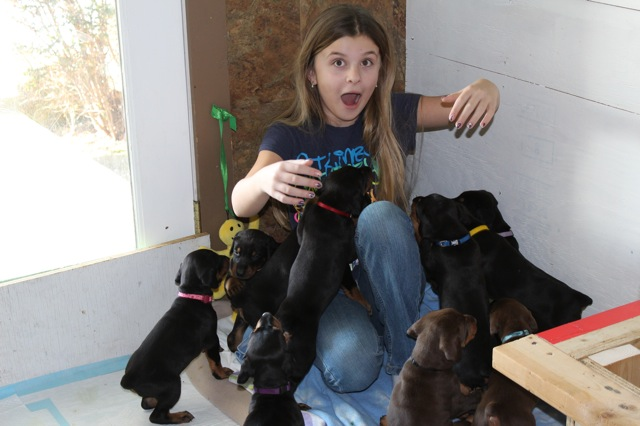 girl-with-puppies