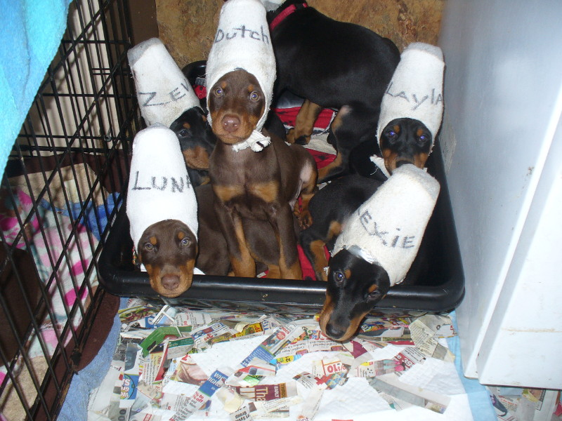 pups_in_cups